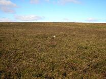 Stone setting on Almsworthy Common  © Exmoor National Park Authority